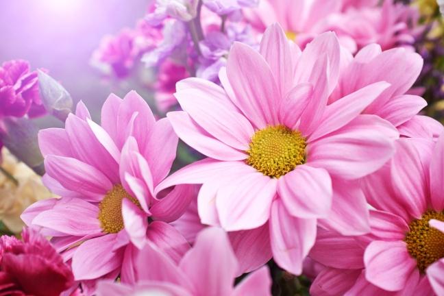 Beautiful spring daisy flowers