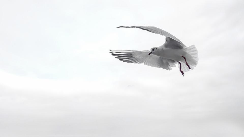 wings-bird-overcome