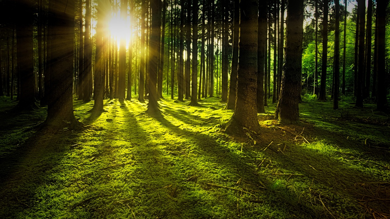 Dawn in the forest image